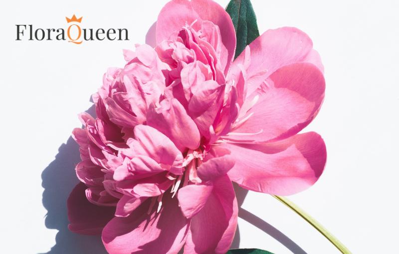 Una flor, el mejor regalo de cumpleaños, incluso en verano